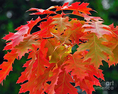 Photograph - A Splash Of Autumn Color by Chuck Flewelling