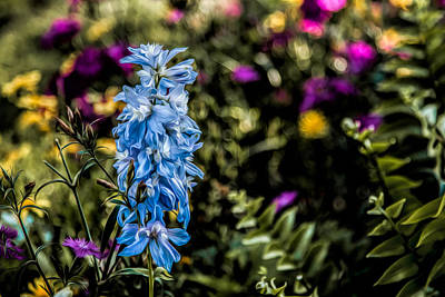 Photograph - A Splash Of Blue by Joshua Minso