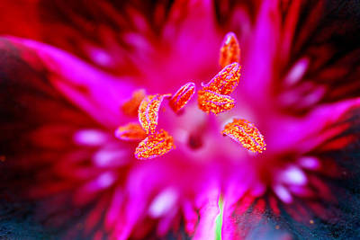 Photograph - A Splash Of Colour by Wendy Wilton