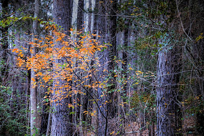 Photograph - A Splash Of Fall Color by Philip Rispin