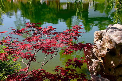 Chinese Red Maple Tree Photograph - A Splash Of Red by Denise Mazzocco