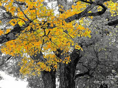 Photograph - A Splash Of Yellow by Marcia Lee Jones