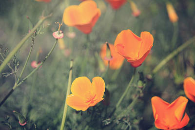 Orange Photograph - A Springtime Breeze by Laurie Search
