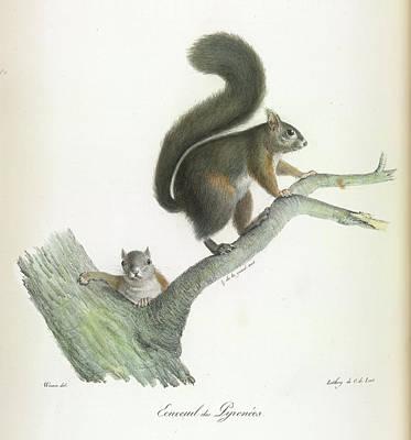 A Squirrel Art Print
