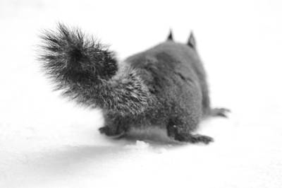 Photograph - A Squirrel In The Snow II by Daniel Woodrum