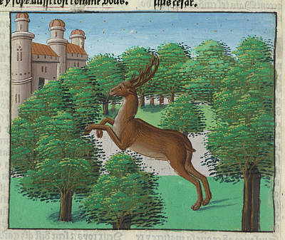 A Stag Art Print by British Library