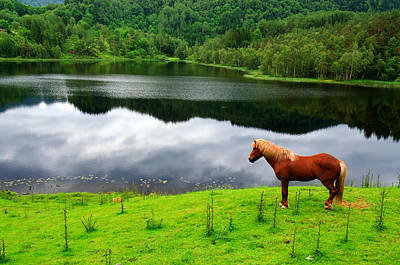 A Stallion Watching His Kingdom Art Print