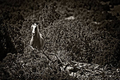 Forelock Photograph - A Stallions Curiosity D7935 by Wes and Dotty Weber