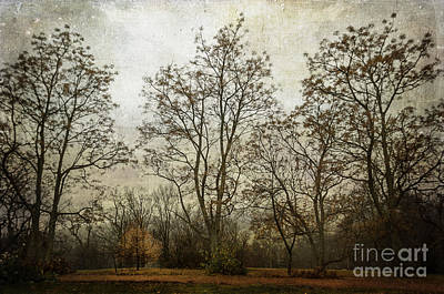 Photograph - A Stand Of Trees by Terry Rowe