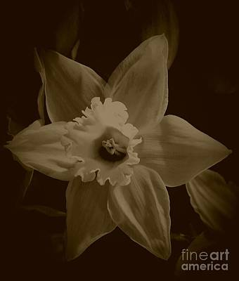 Photograph - A Star Is Born by Angela J Wright