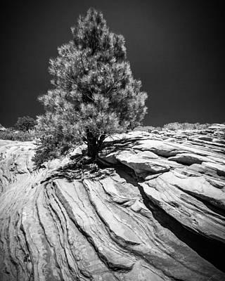 Photograph - A Steadfast Spirit by Dwight Theall