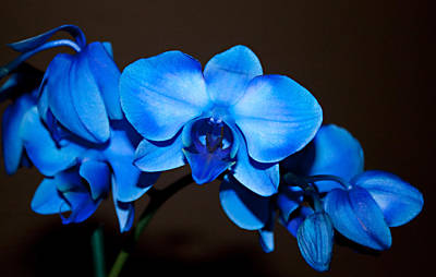 Art Print featuring the photograph A Stem Of Beautiful Blue Orchids by Sherry Hallemeier