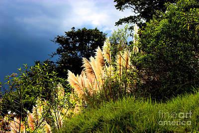 Pampas Grass Photograph - A Storm Is A Brewin' by Al Bourassa