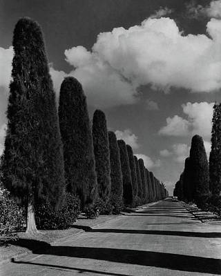 A Street Lined With Cypress Trees Art Print