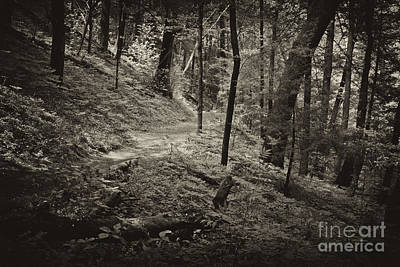 Photograph - A Stroll Through A Quiet Place by Paul W Faust -  Impressions of Light