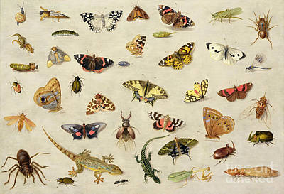 Grasshopper Painting - A Study Of Insects by Jan Van Kessel