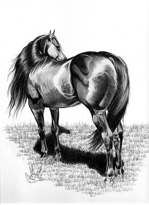 Drawing Of A Horse Drawing - A Study Of The Thoroughbred Hindquarters In Bic Pen by Cheryl Poland