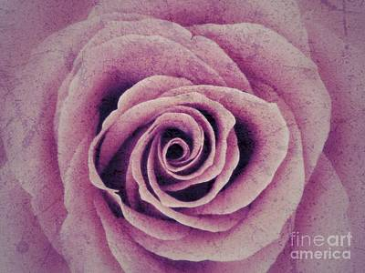 Photograph - A Sugared Rose by Joan-Violet Stretch