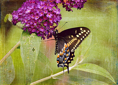 Photograph - A Summer Pause by Michelle Ayn Potter