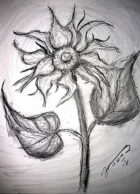 Sunflowers Drawings - A Sunflower by Jose A Gonzalez Jr