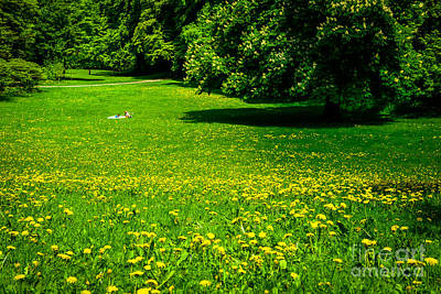 A Sunny Day In The Park Art Print by Hannes Cmarits