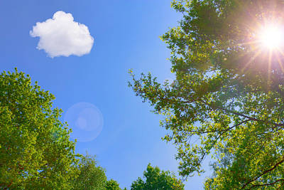 Photograph - A Sunny Day by Semmick Photo