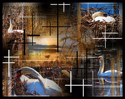 A Swans Mysterious World Art Print by Andrew Sliwinski