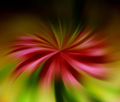 Blend Photograph - A Swirled Flower by Jeff Swan