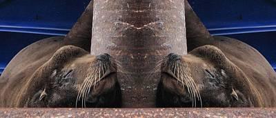 Photograph - A Symmetrical Sea Lion by Elery Oxford