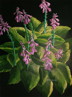 Painting - A Symphony Of Hostas by Carol L Miller