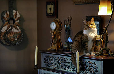 A Tabby Cat Sitting On Top Of An 1857 Art Print