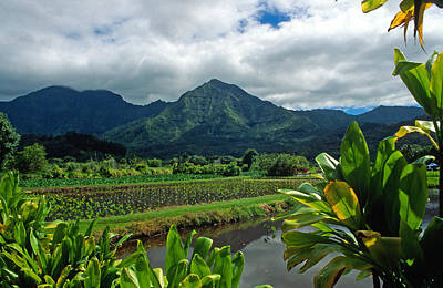 A Taro Farm In Hanalei Art Print