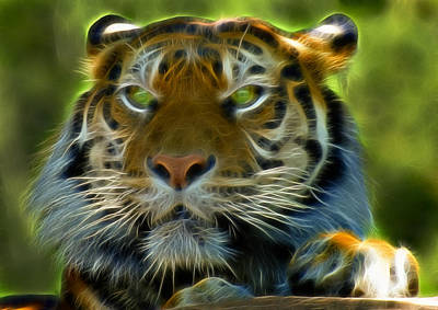 Photograph - A Tiger's Stare II by Ricky Barnard
