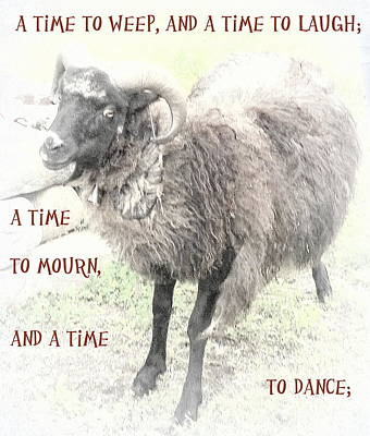 Advertising Archives - The Sheep Hope Of A Time To Laugh And Dance  by Hilde Widerberg