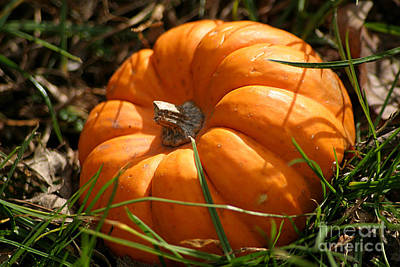 Photograph - A Tiny Pumpkin In The Grass by Living Color Photography Lorraine Lynch