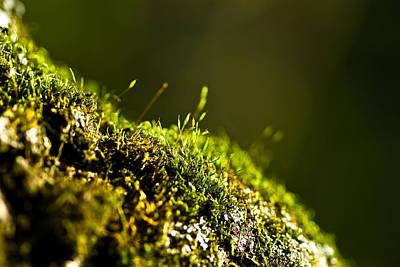 Moss Photograph - A Tiny World by Samantha Eisenhauer
