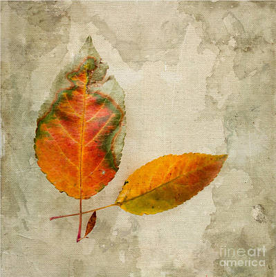 Of Autumn Photograph - A Touch Of Autumn #1 by Betty LaRue