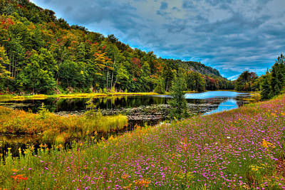 Photograph - Summer Flowers On Bald Mountain Pond by David Patterson