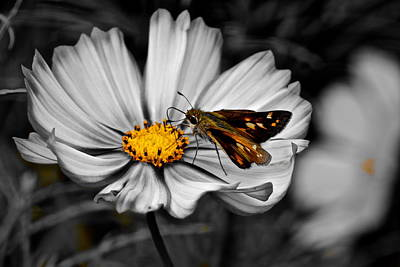 Selective Color Photograph - A Touch Of Grey by Frozen in Time Fine Art Photography