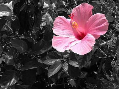 Photograph - A Touch Of Pink by Aimee L Maher Photography and Art Visit ALMGallerydotcom