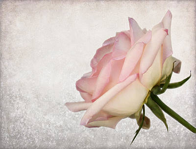 Photograph - A Touch Of Pink by Judy Vincent