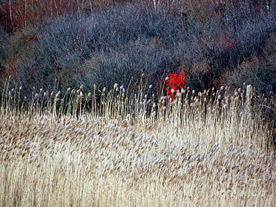Photograph - A Touch Of Red by Marcia Lee Jones