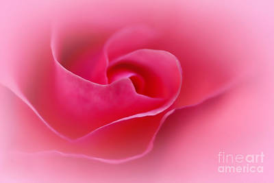 Nature Unfurls Photograph - A Touch Of Softness by Kaye Menner
