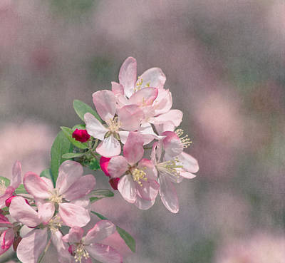 Photograph - A Touch Of Spring by Kim Hojnacki