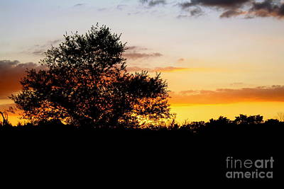 Photograph - A Tree At Sunset by Sherri Williams