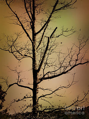 Photograph - A Tree By The Lake by Dawn Gari