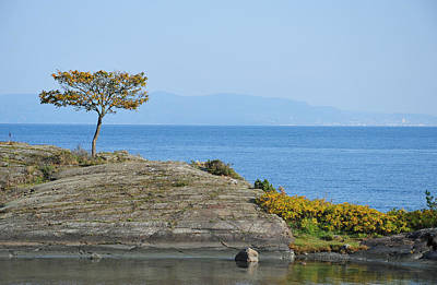 Photograph - A Tree By The Sea by Randi Grace Nilsberg