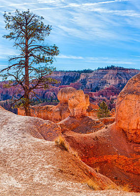 Photograph - A Tree Grows In Bryce by John M Bailey