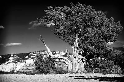 A Tree Grows In Sedona Art Print