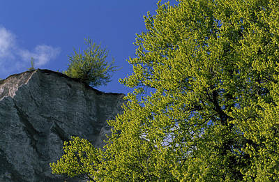 Photograph - A Tree Grows On Top Of A Chalk Cliff by Norbert Rosing